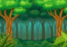 Fond vert de forêt Photo libre de droits