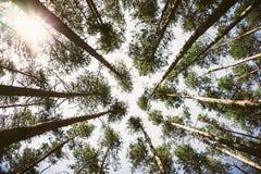 Fond vert de forêt en jour ensoleillé photo stock