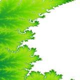 Fond vert de fractale de feuille Photographie stock libre de droits