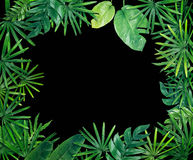 Fond vert de frontière de feuille Images libres de droits