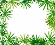 Fond vert de frontière de feuille Photos stock