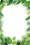 Fond vert de frontière de feuille Photos libres de droits