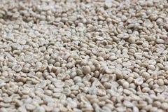Fond vert de grain de café Images libres de droits