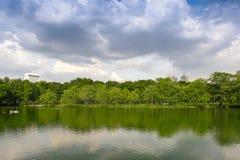 Fond vert de jardin d'arbre Photos libres de droits