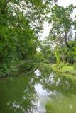 Fond vert de jardin d'arbre Image libre de droits