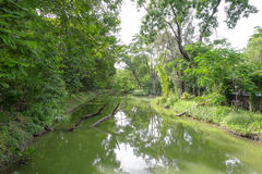 Fond vert de jardin d'arbre Images libres de droits
