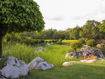 Fond vert de jardin d'arbre Image stock