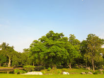 Fond vert de jardin d'arbre Photographie stock
