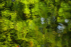 Fond vert de l'eau Photographie stock