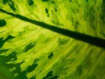 Fond vert de lame Photographie stock libre de droits