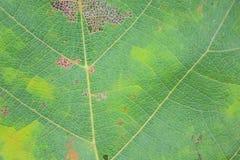 Fond vert de lame Image libre de droits