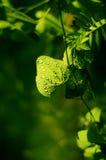 Fond vert de lame Photos stock