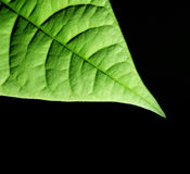 Fond vert de lame Images libres de droits