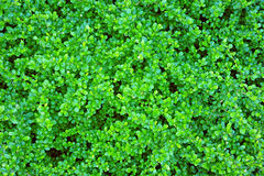 Fond vert de lame Photos libres de droits