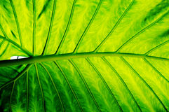 Fond vert de lame Photo libre de droits