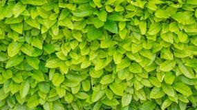 Fond vert de lame images stock