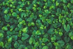 Fond vert de lame Image stock