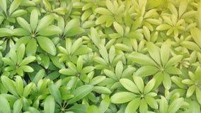 Fond vert de modèle de feuille de texture photos stock