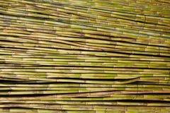Fond vert de modèle de texture de récolte de canne de rivière Image stock