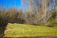 Fond vert de modèle de texture de récolte de canne de rivière Image libre de droits