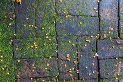 Fond vert de MOS, pierre avec le MOS vert photos stock