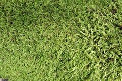 Fond vert de mousses Image libre de droits