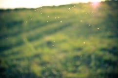 Fond vert de mouvement Le soleil d'été, boke Photos libres de droits