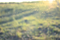 Fond vert de mouvement Le soleil d'été, boke Photographie stock libre de droits
