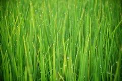 Fond vert de nature images stock