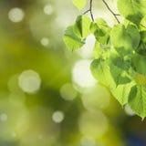 Fond vert 02 de nature Photographie stock libre de droits