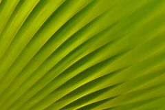 Fond vert de nature Photo stock