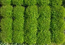 Fond vert de nature d'usines de pépinière image libre de droits