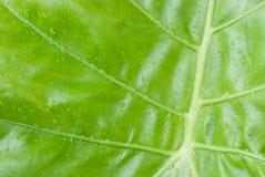 Fond vert de nature de feuille Images stock