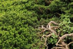 Fond vert de nature de lame Photo libre de droits