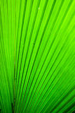 Fond vert de nature de lame Image stock