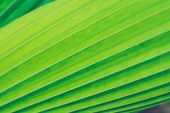 fond vert de nature de texture de feuille Photo libre de droits