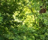 Fond vert de nature de forêt Photos libres de droits