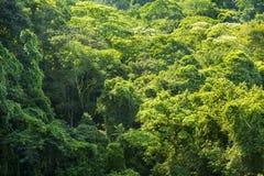Fond vert de nature de forêt Image libre de droits