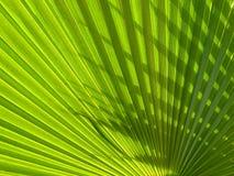 Fond vert de paume Images stock