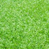 Fond vert de peinture acrylique Photographie stock