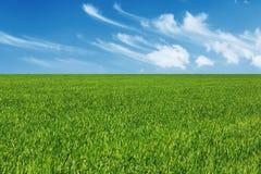 Fond vert de pré Photo libre de droits