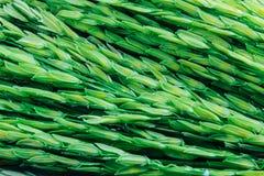Fond vert de riz non-décortiqué Images libres de droits