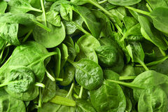Fond vert de salade de feuille de valériane Images libres de droits