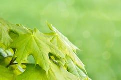 Fond vert de source avec l'orientation peu profonde Photographie stock