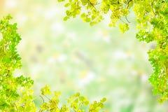 Fond vert de tache floue Photos libres de droits