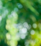Fond vert de tache floue Photographie stock
