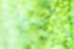 Fond vert de tache floue Images stock