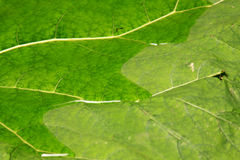 Fond vert 02 de texture de feuille Photos libres de droits
