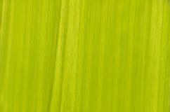 Fond vert de texture de lame Photographie stock libre de droits