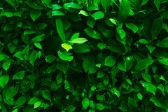 Fond vert de texture de lame Images stock